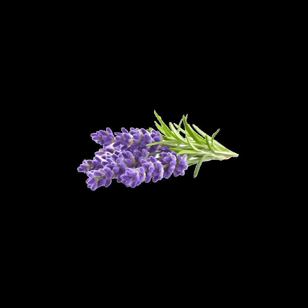 Lavender In Tea