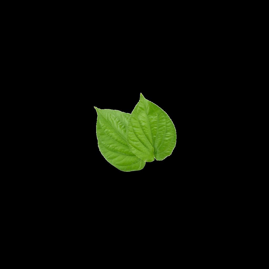 Paan Leaves In Tea