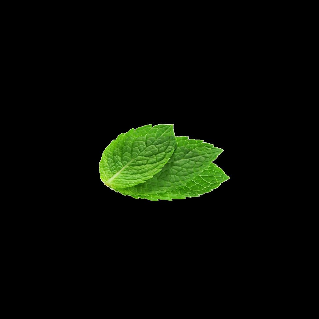 Peppermint In Tea